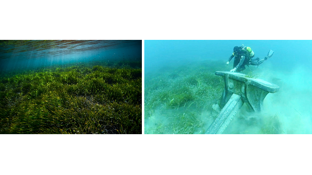 INVITATION | Mission Posidonia: how to save the lungs of the sea ?